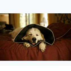 COMFY CONE COLLARE EXTRALARGE
